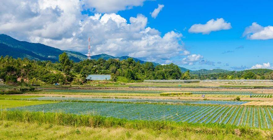 ChiangMai_Farming_1000px