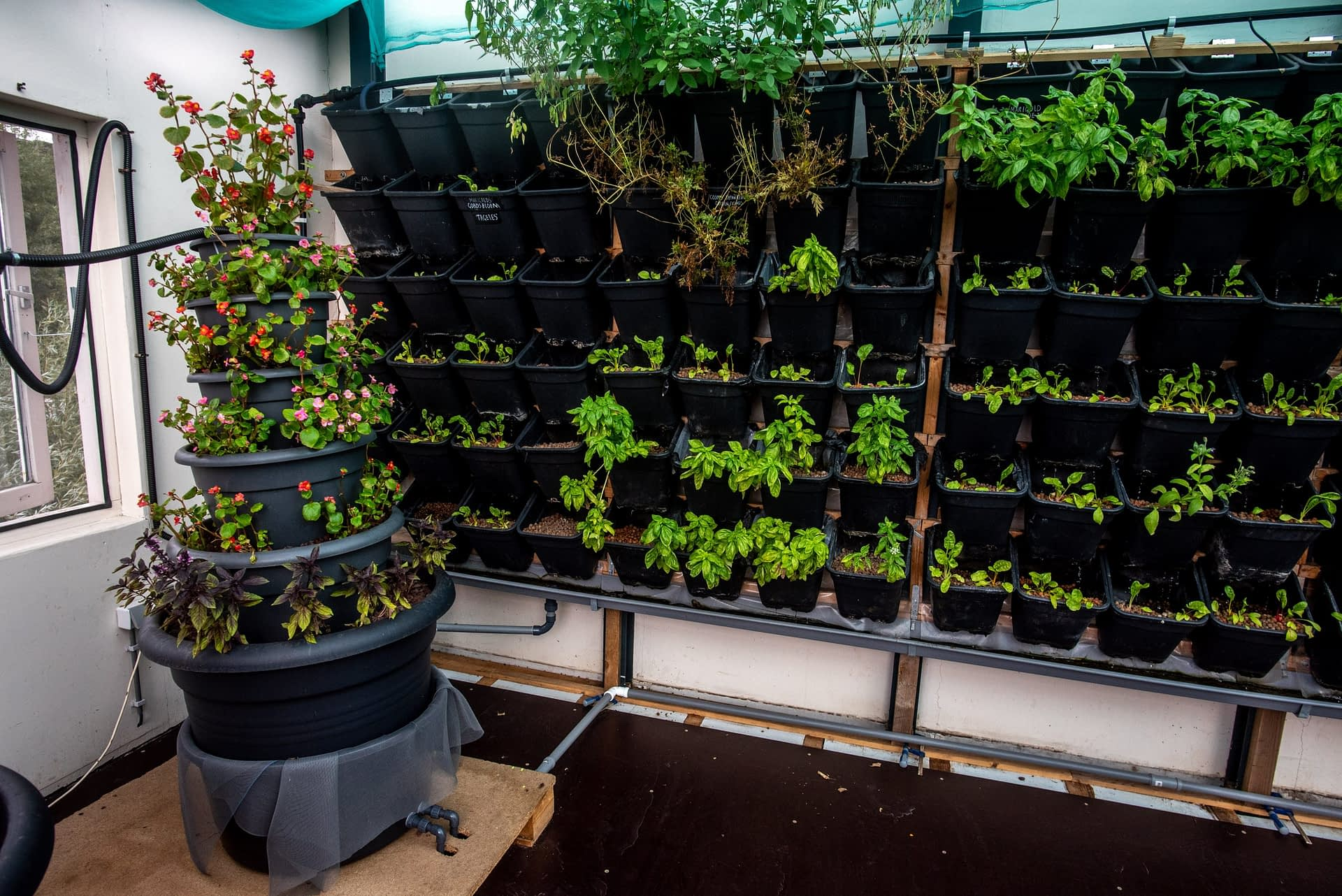 The aquaponics greenhouse will function as a hub for knowledge dissemination of aquaponics techniques, equipping locals with the capability to develop their own aquaponics units.