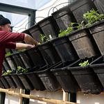 De Ceuvel greenhouse