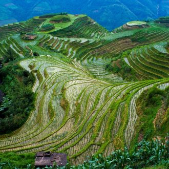 Global_Food_System_Photo1_large