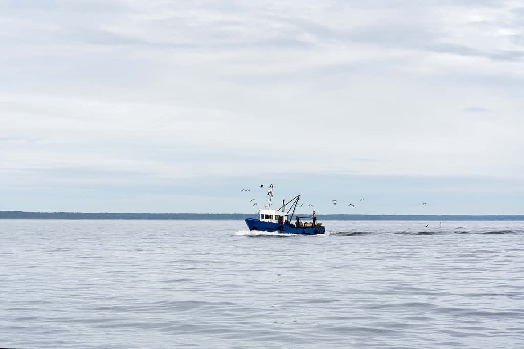 Fishing_Value at risk in the blue economy