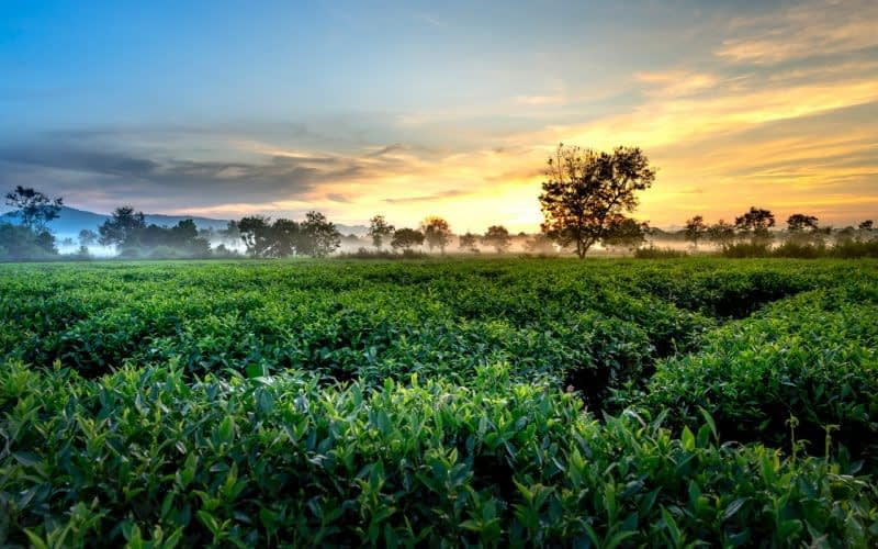 agriculture-countryside-cropland-2582652